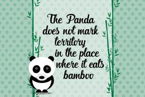 panda-proverbio-illustrazione